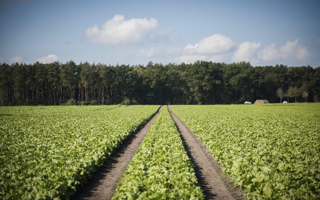 Saisonarbeitskräfte dringend benötigt – Verbände-Bündnis für erneute Ausweitung der 70-Tage-Regelung